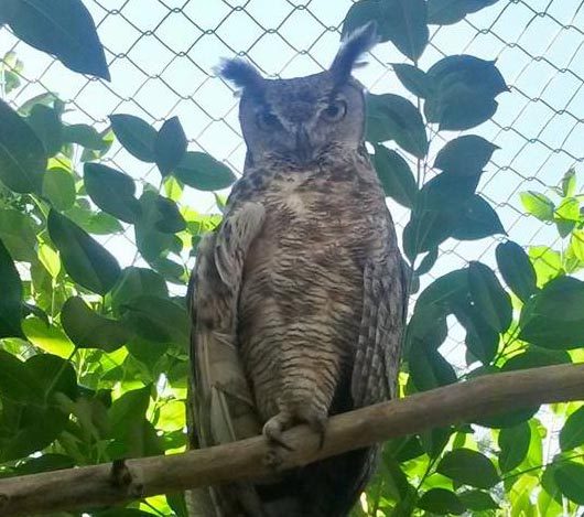 owls3.jpg