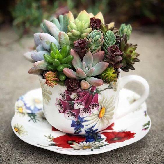 succulents-in-a-tea-cup.jpg