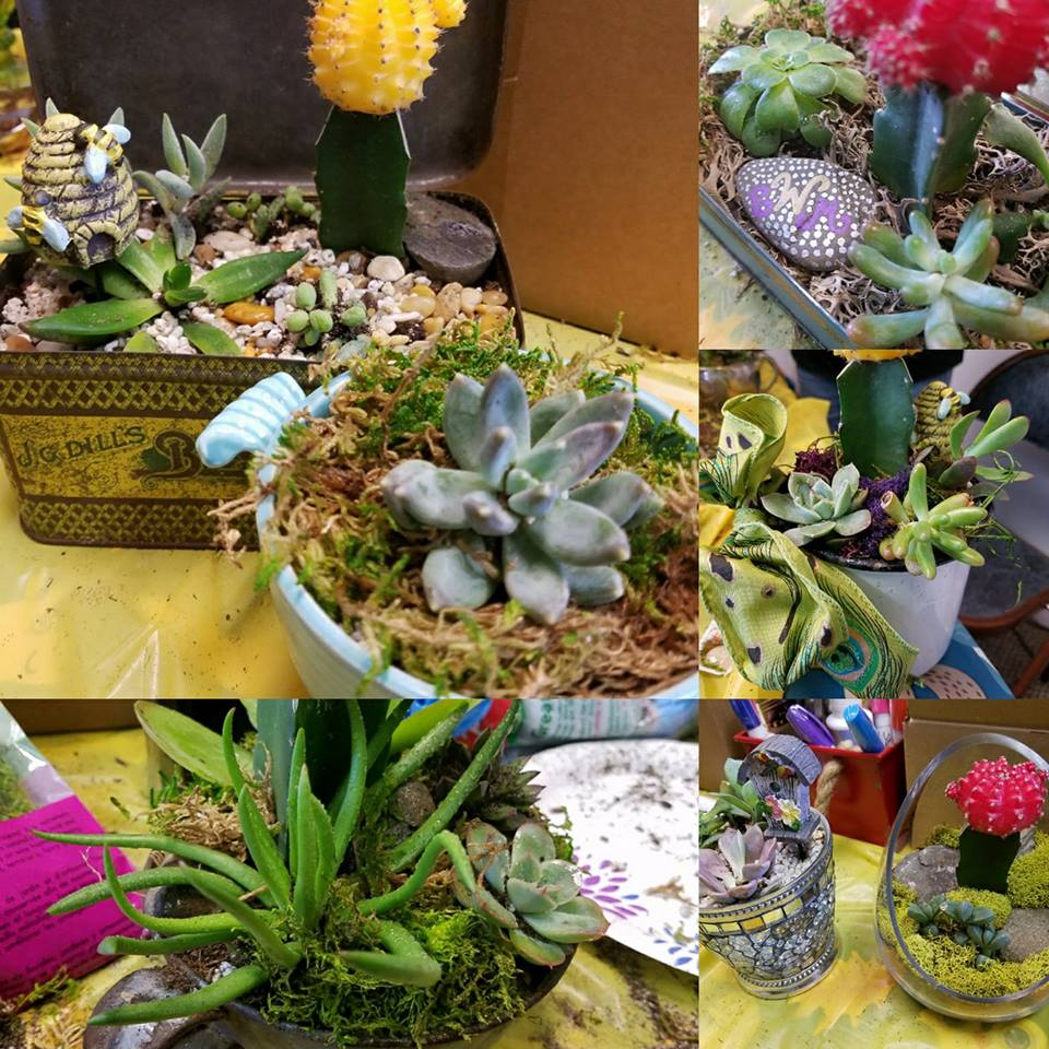 succulent-collage.jpg