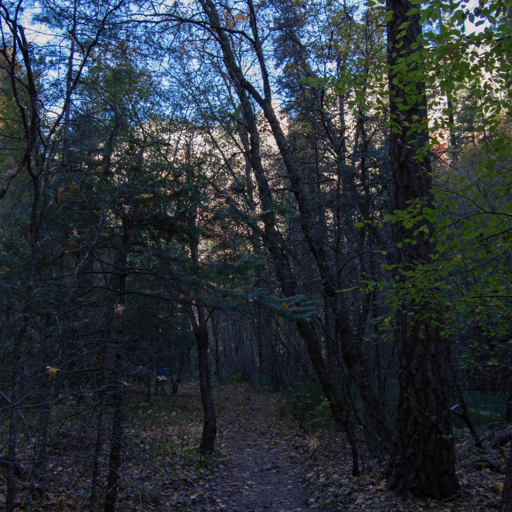 west-fork-trail