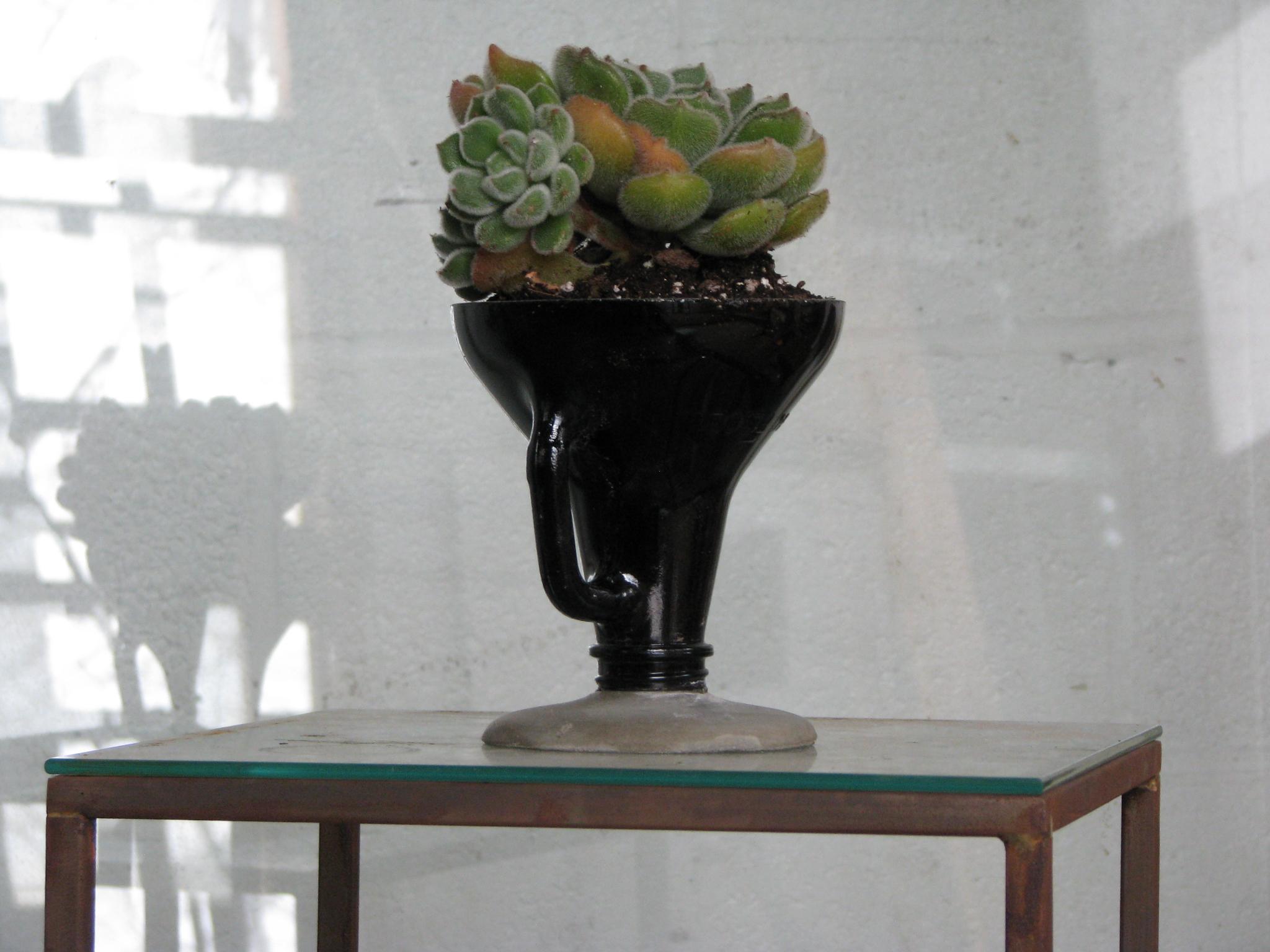 Growler Terrarium