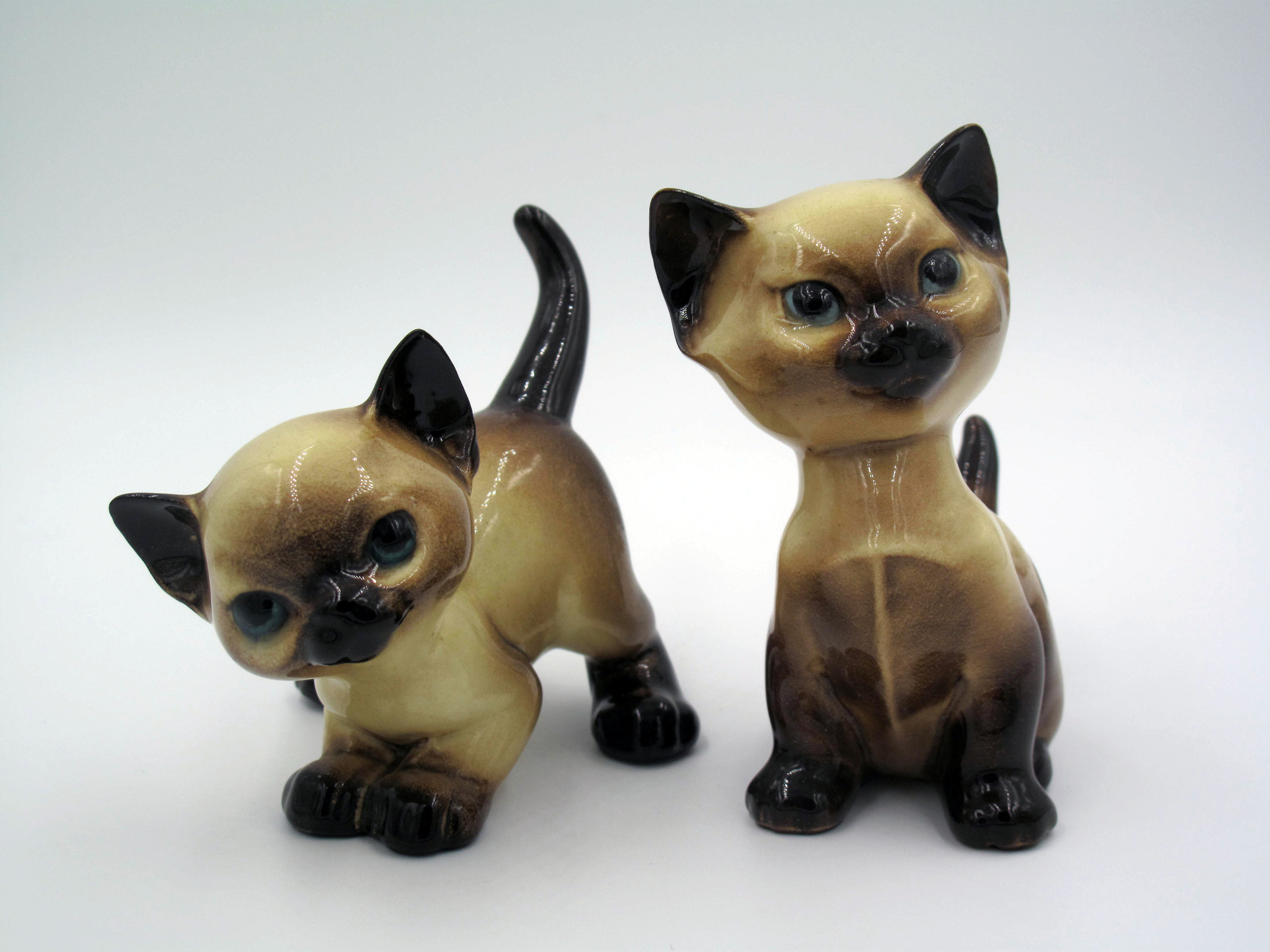 """Siamese Kittens """"Quan Tiki"""" and """"An How"""""""