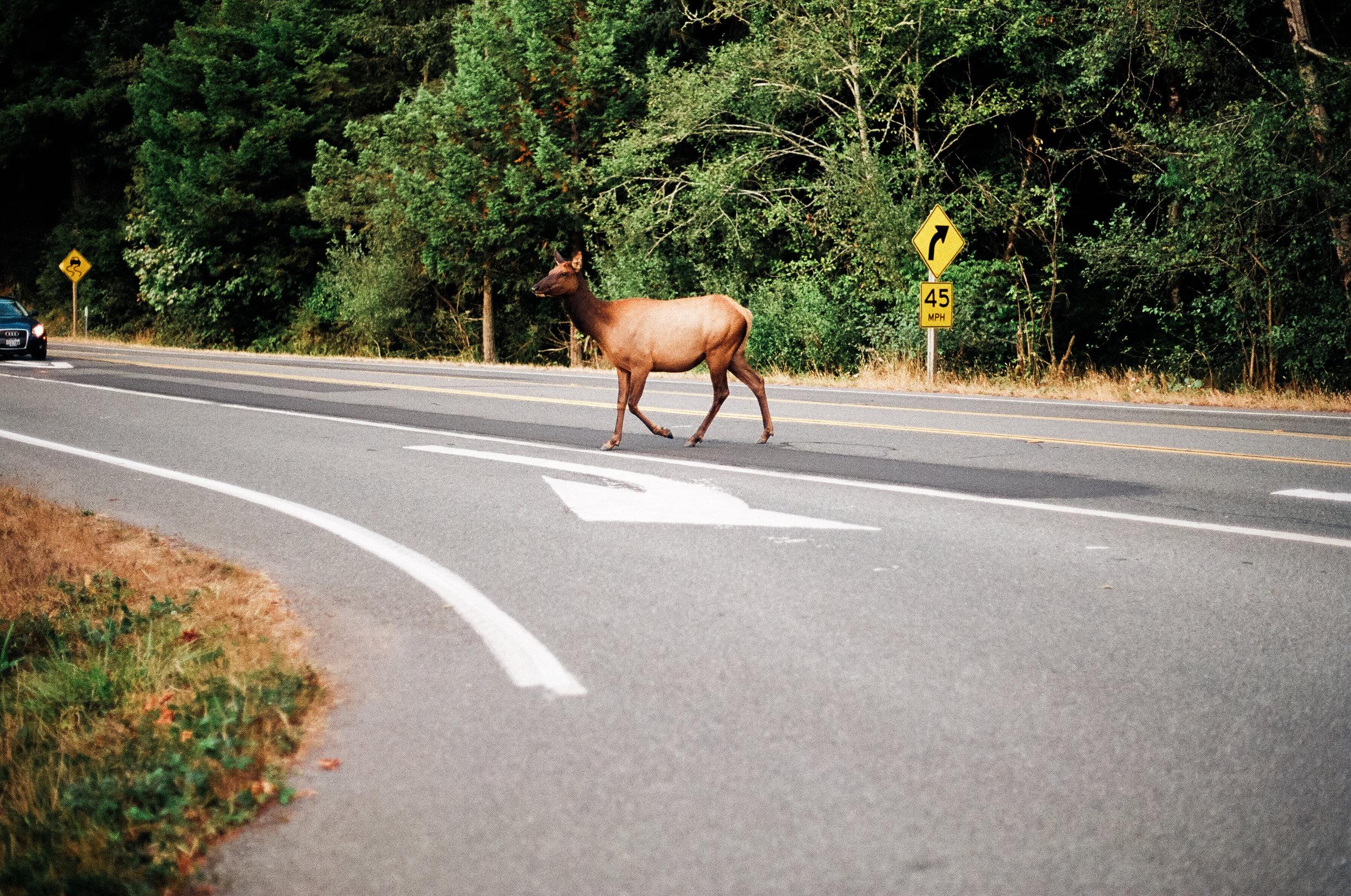 elk_crossing