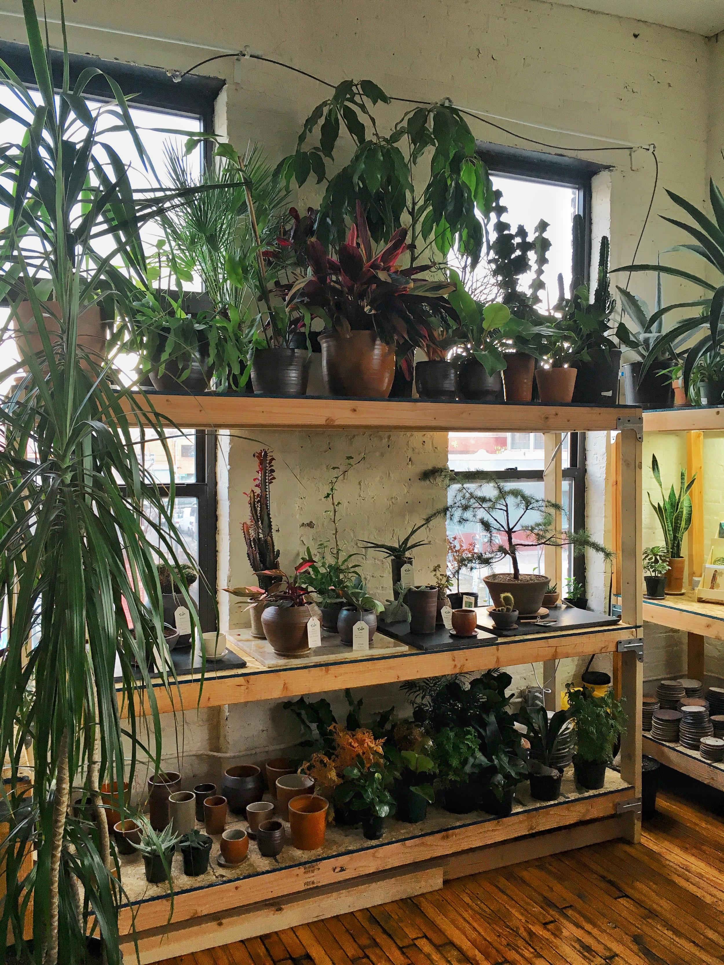 tula house bushwick plants