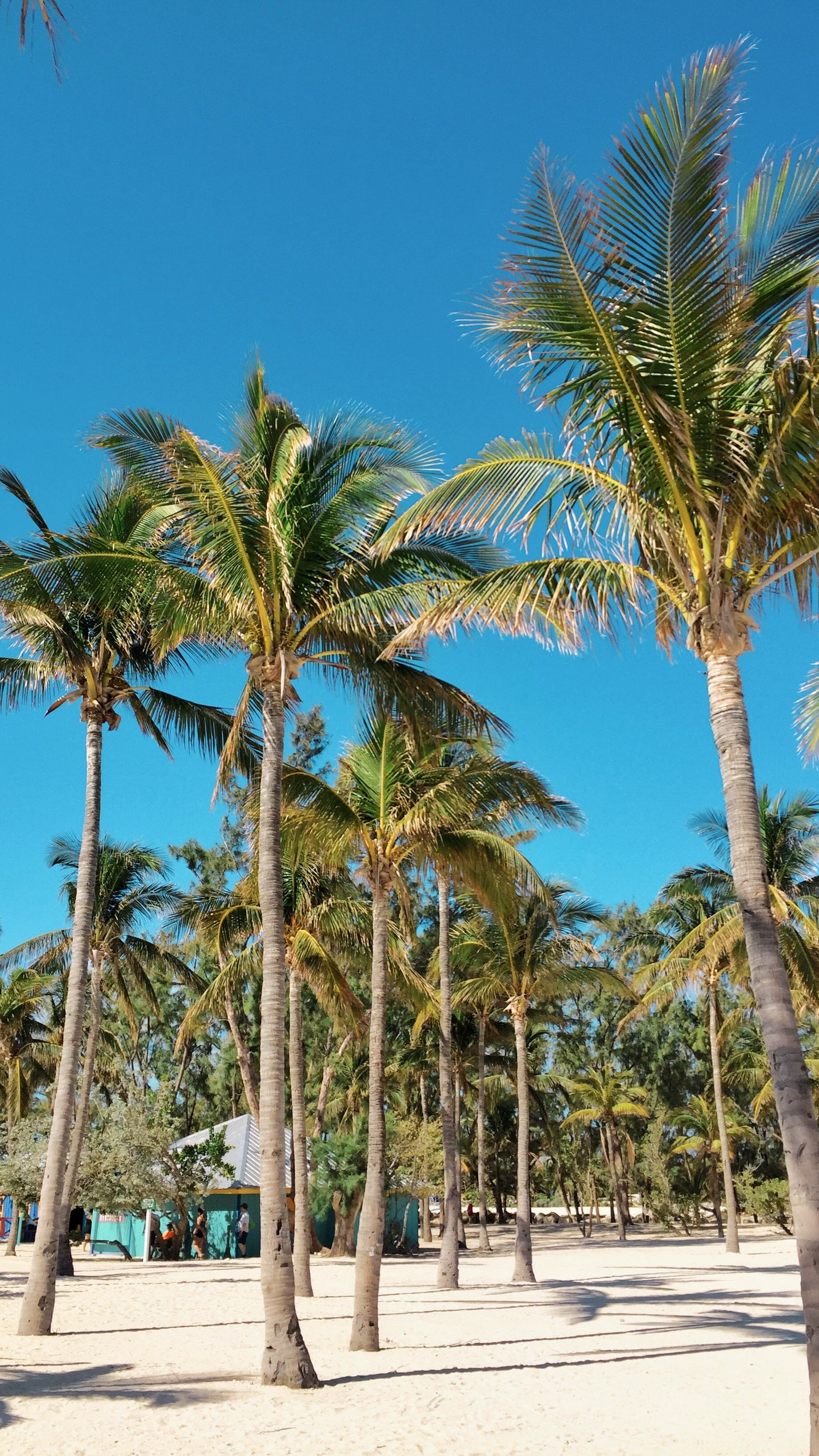 cococay palm trees