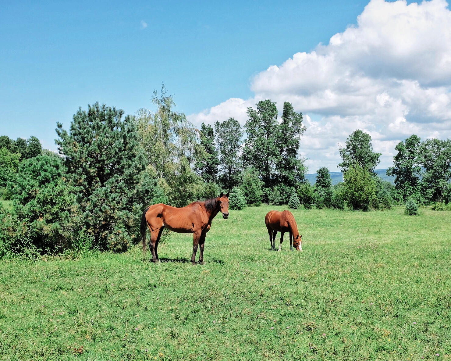 horses in finger lakes