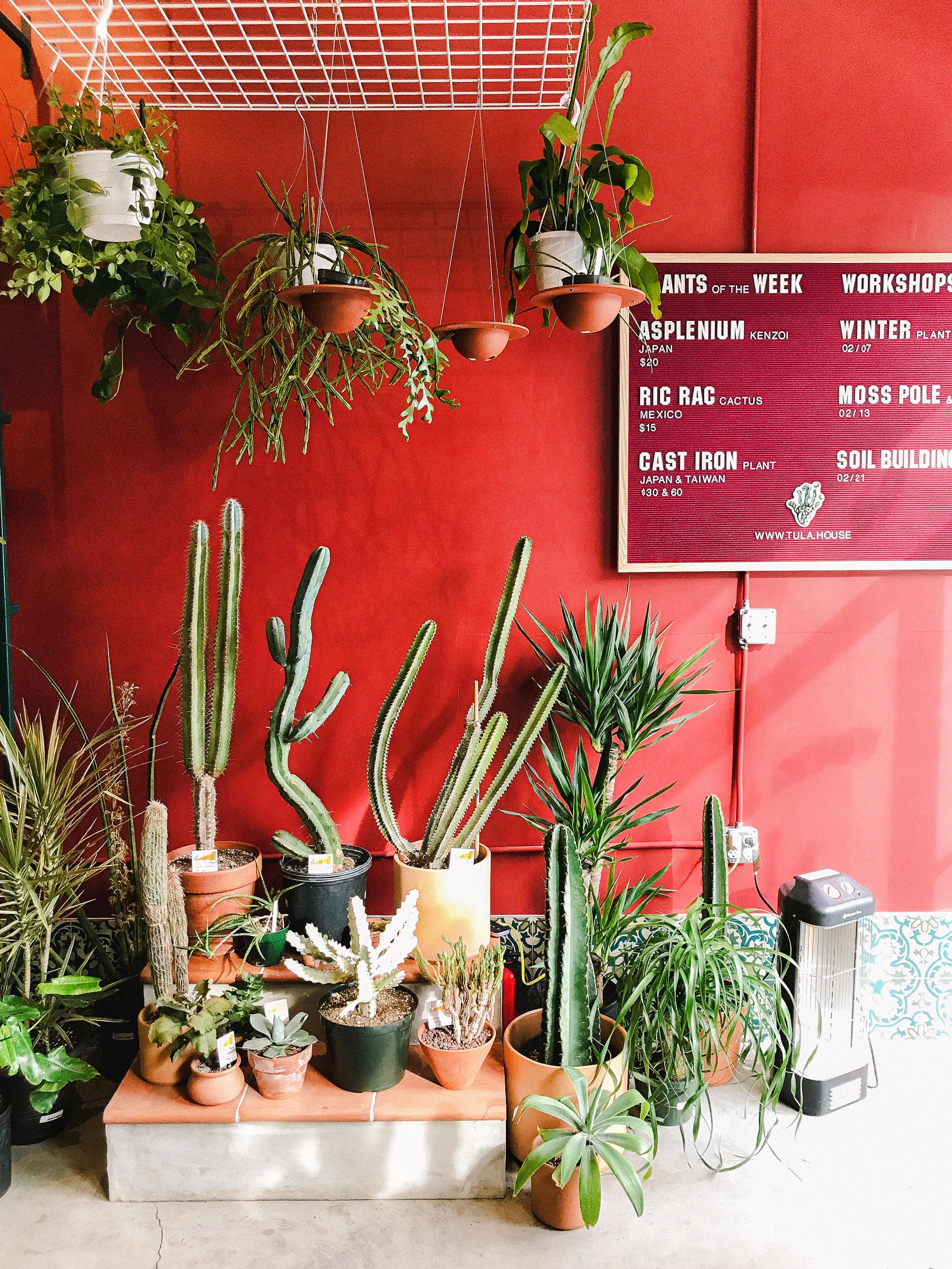 tula house plants greenpoint