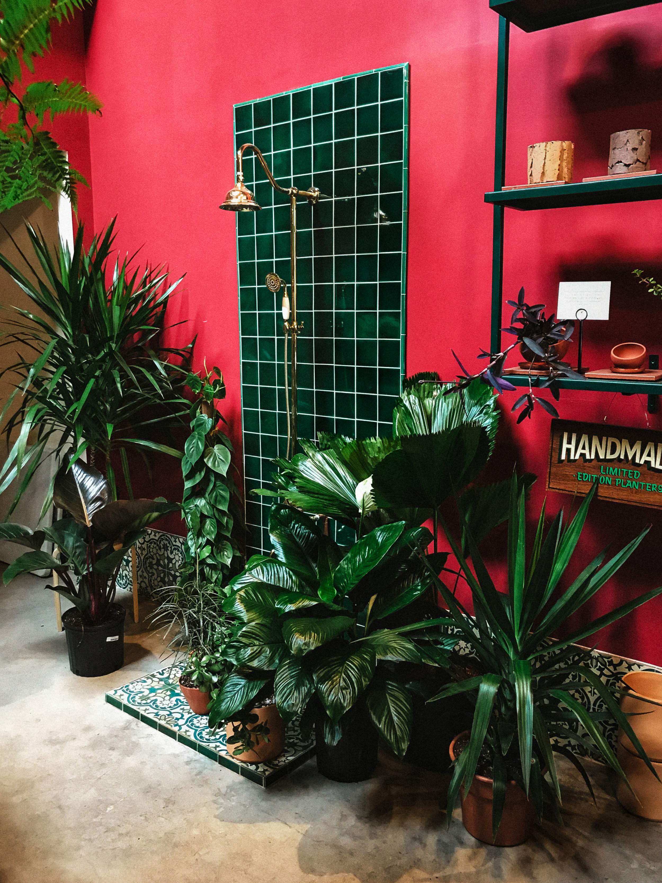 shower tula house plants