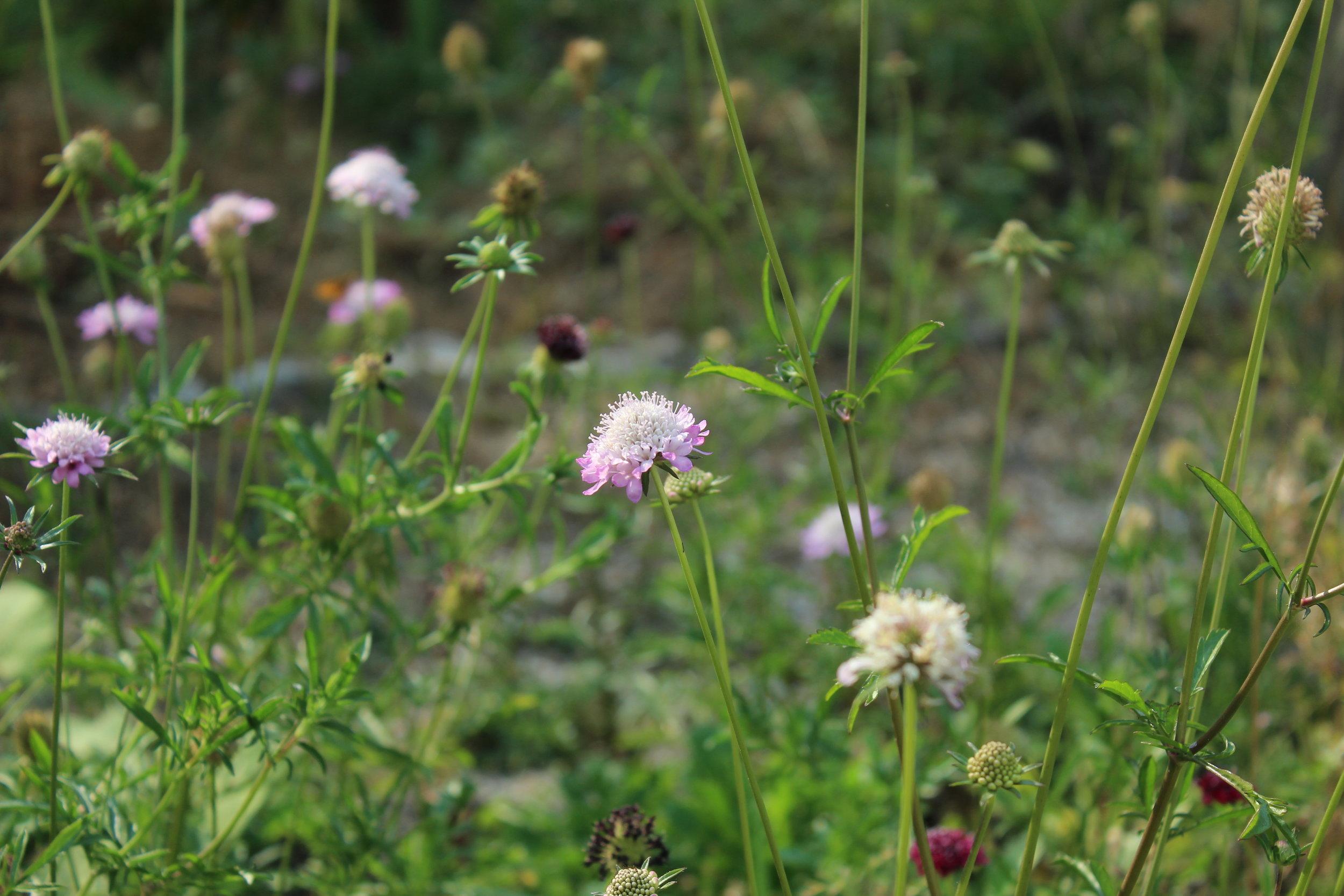 gardenflowersJPG.JPG