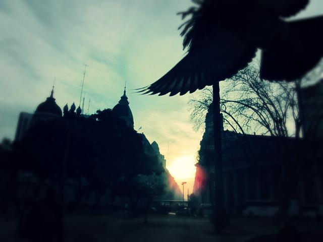 bird+crash+at+sunset.jpg