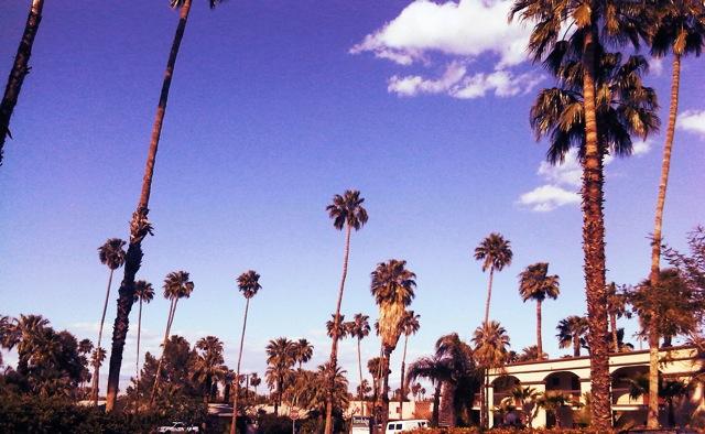 palm+trees.jpg
