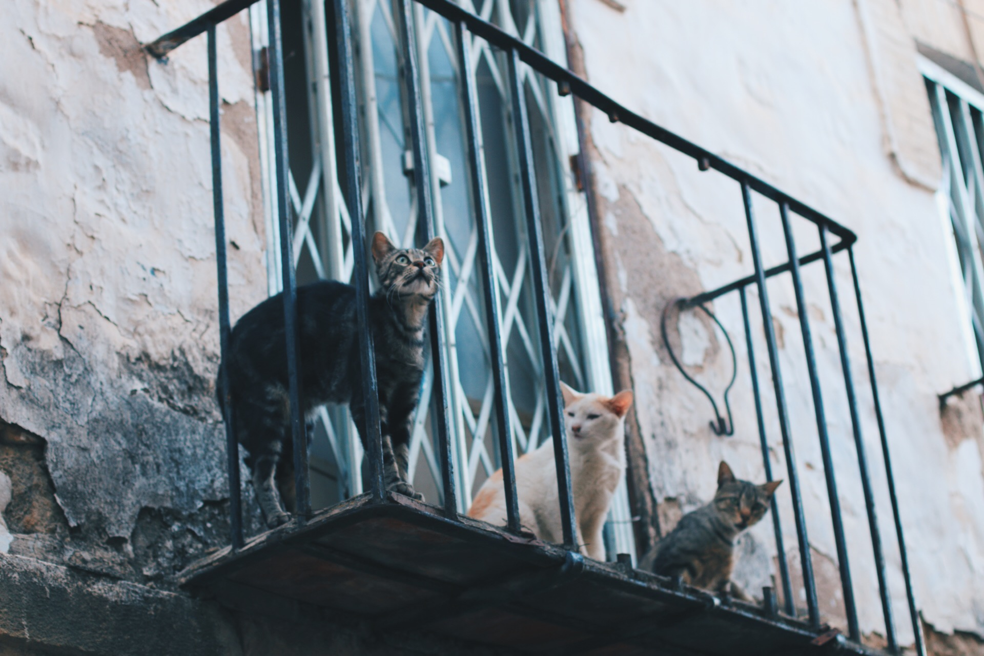 EVERYWHERE YOU LOOK. CATS ON WATCH.