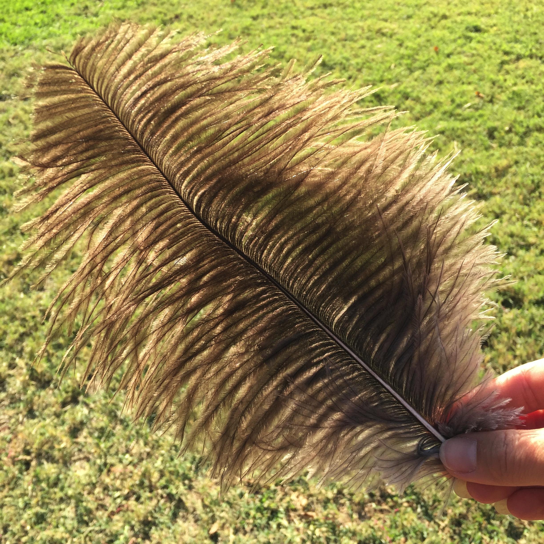 feather opposite.jpg