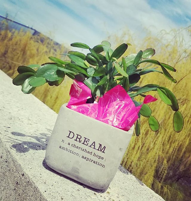 Never stop dreaming. Passing the dream plant on to @kimwhiffen tonight to keep the bloom forward after an inspired workshop. #dream #plant #ambition #aspiration #workshop #lasttuesnightclassatcornell #dreaminprogress
