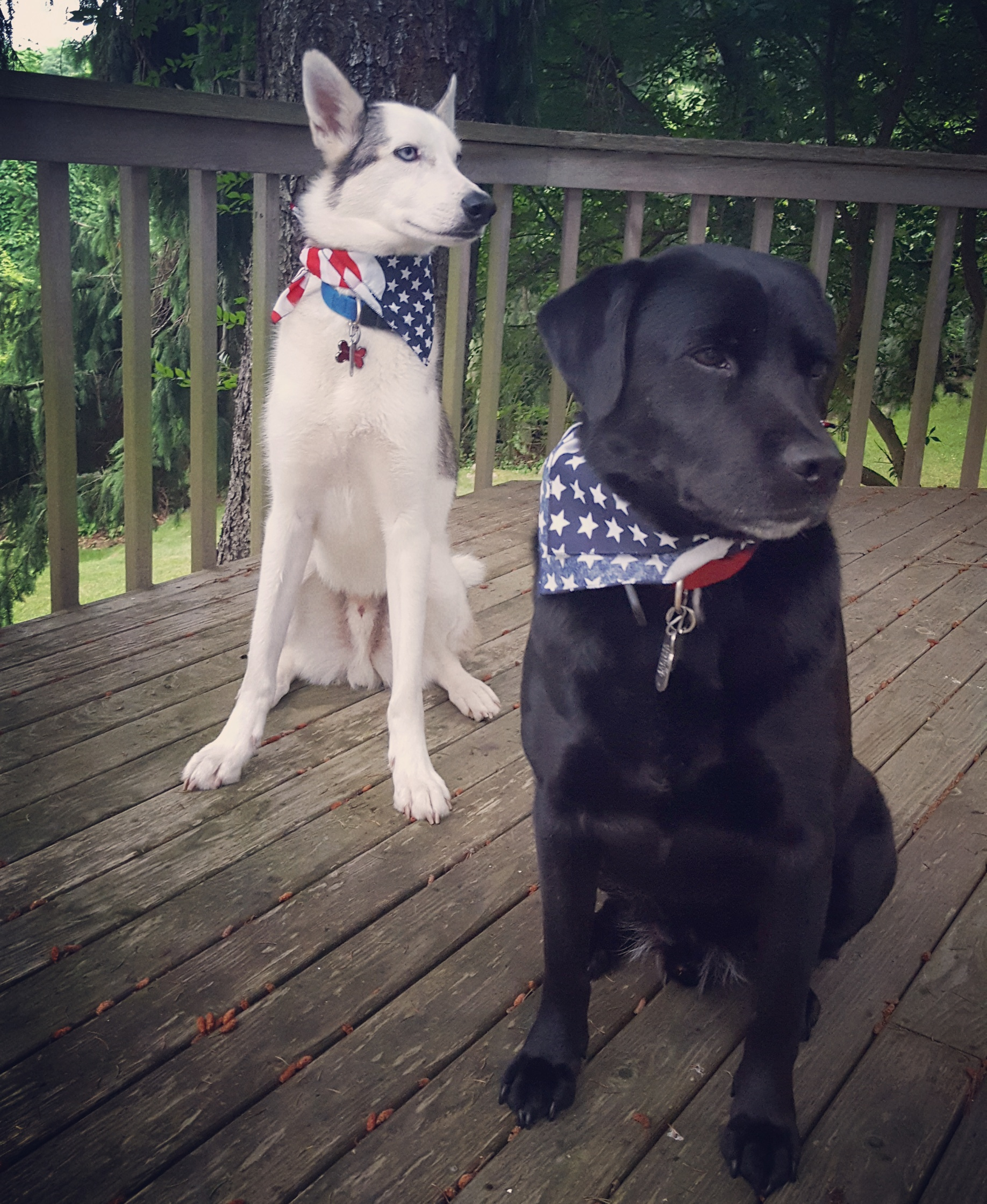 Rambo and Buddy Grunder Say Cheers to the USA