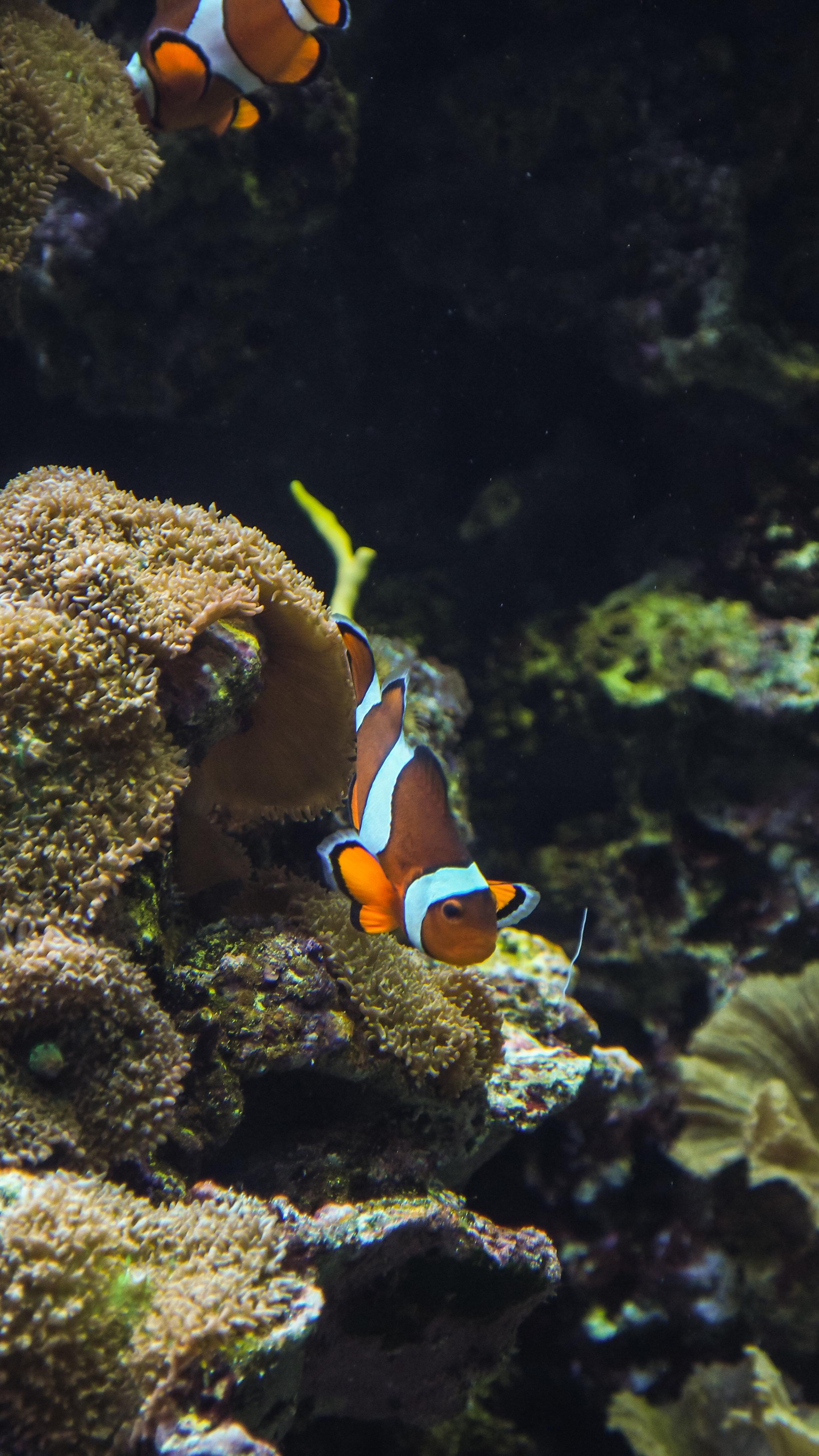 Ripley's Aquarium SC 2016