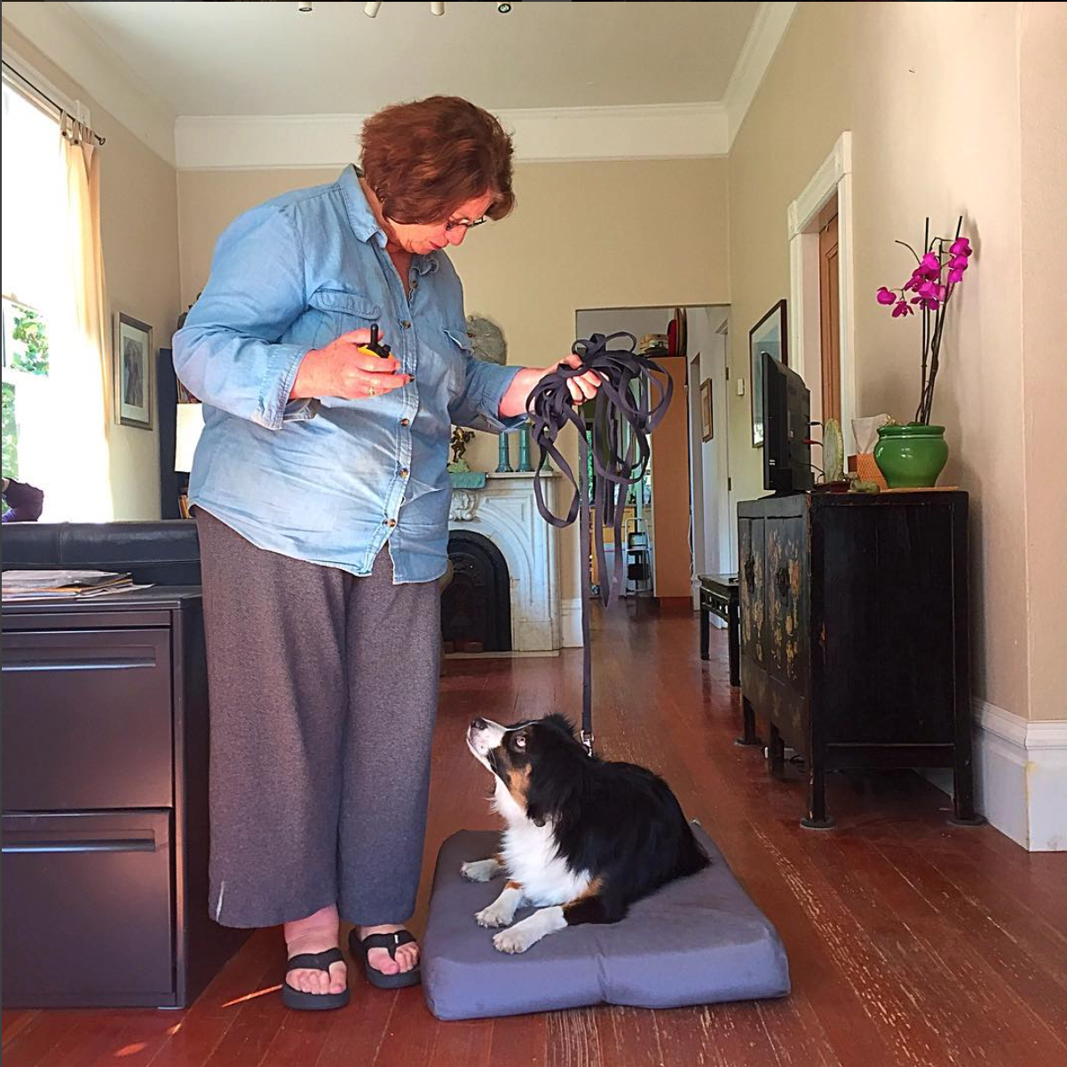 Dharma and Mom, rocking the in-home training session