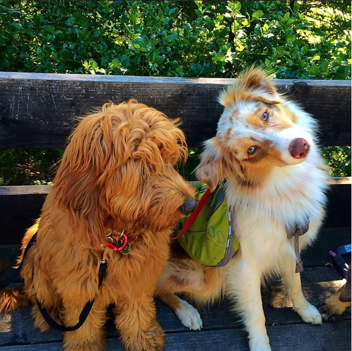 Backpacks are a great way to add a little extra challenge on walks!