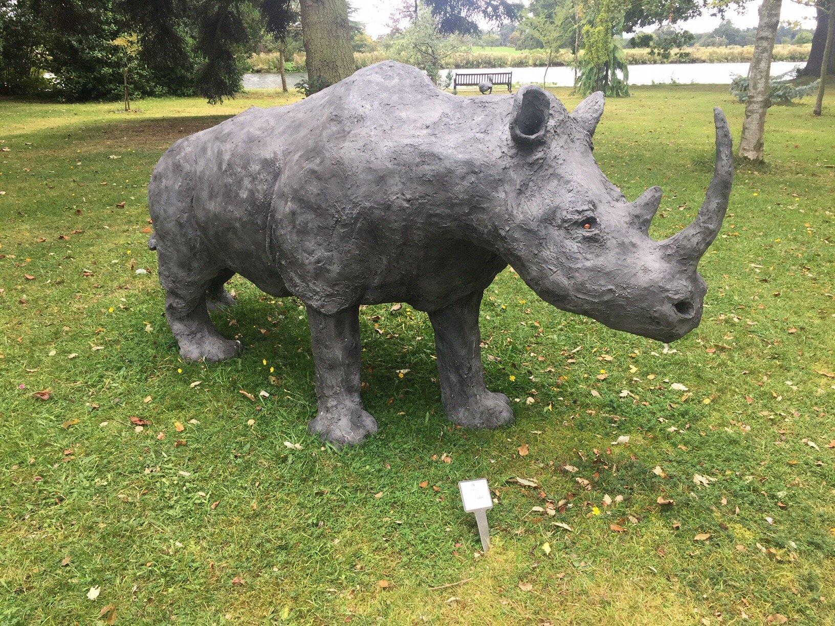 Rowena the rhino