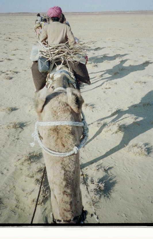 Thar desert trek, MAdia the camel 0001.JPG