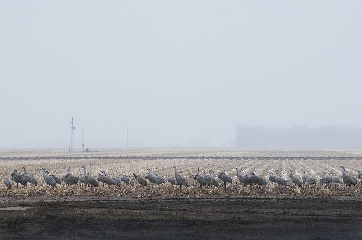 10_Cranes_  Kearney, Nebraska.jpg