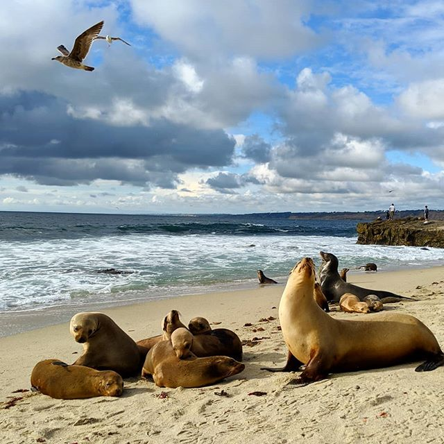 Found: Renaissance painting of sea lions and seagulls and the sea.