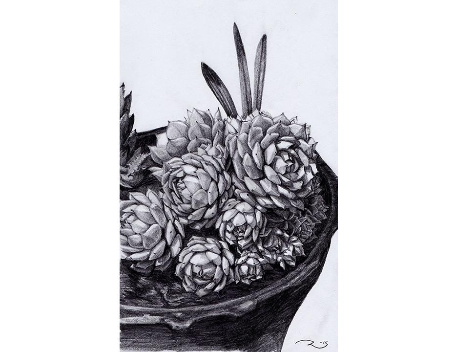 succulent E2.jpg
