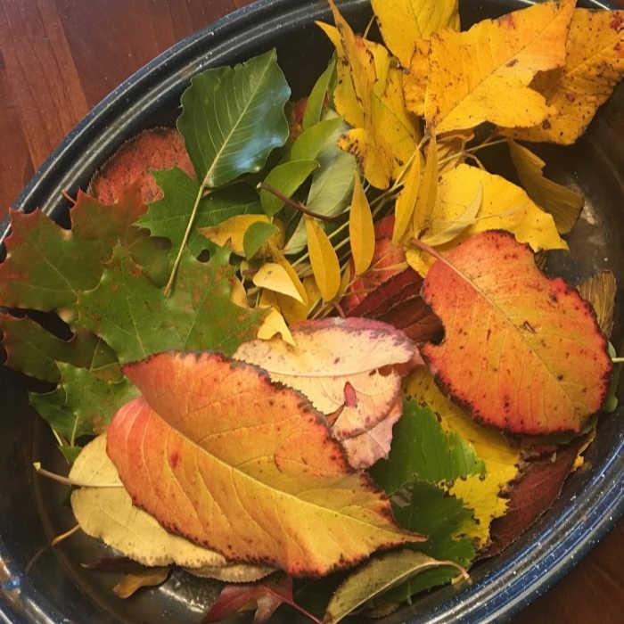 fall leaves for prints.jpg
