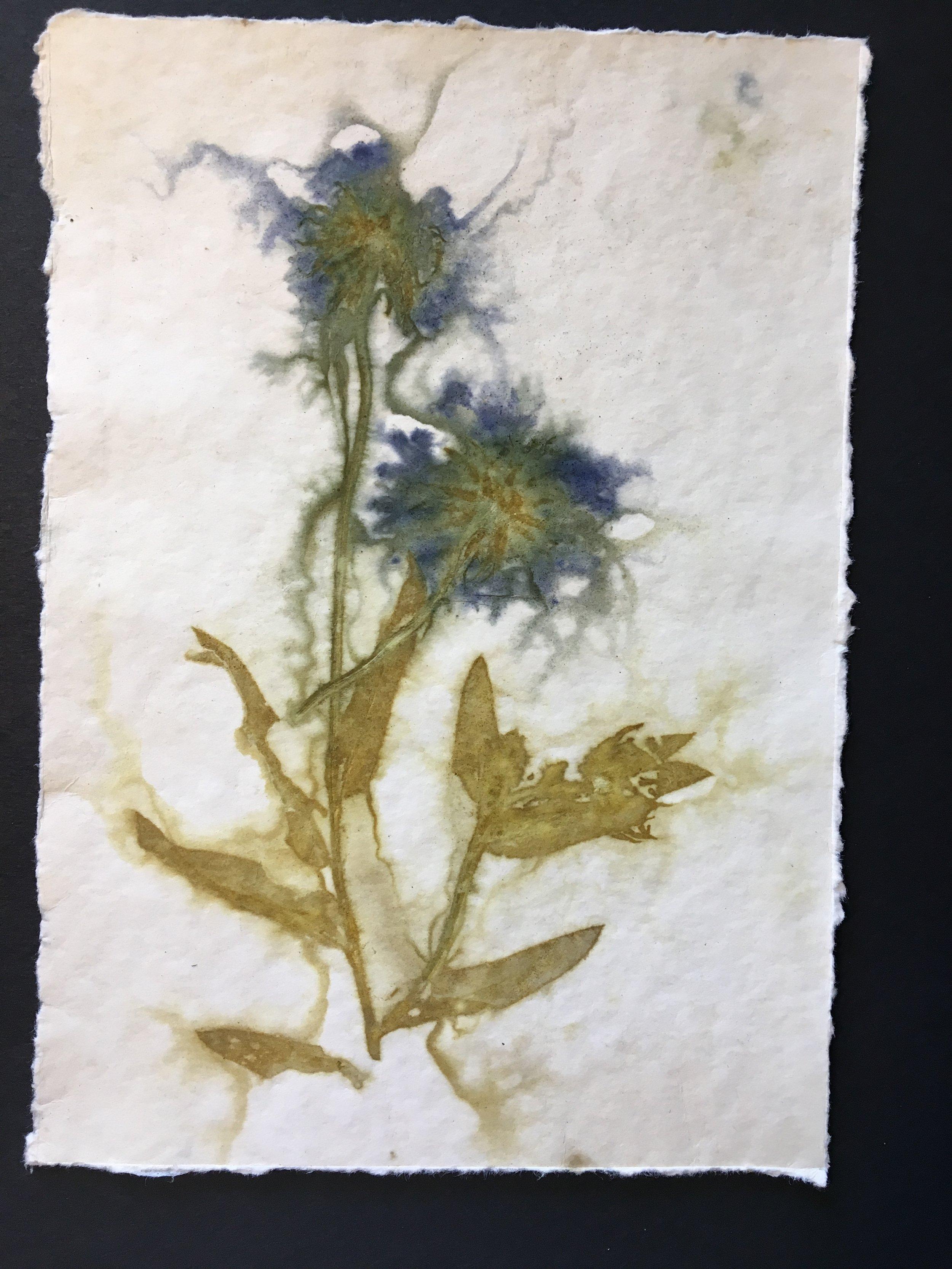Gaillardia flowers and leaves