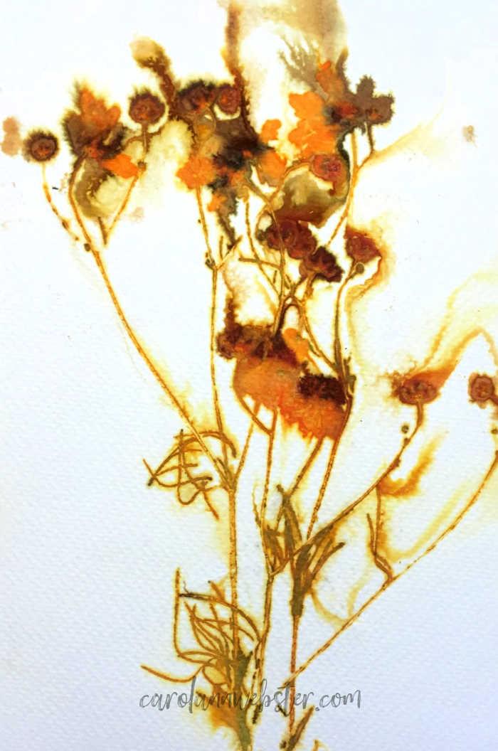 coreopsis (1).jpg