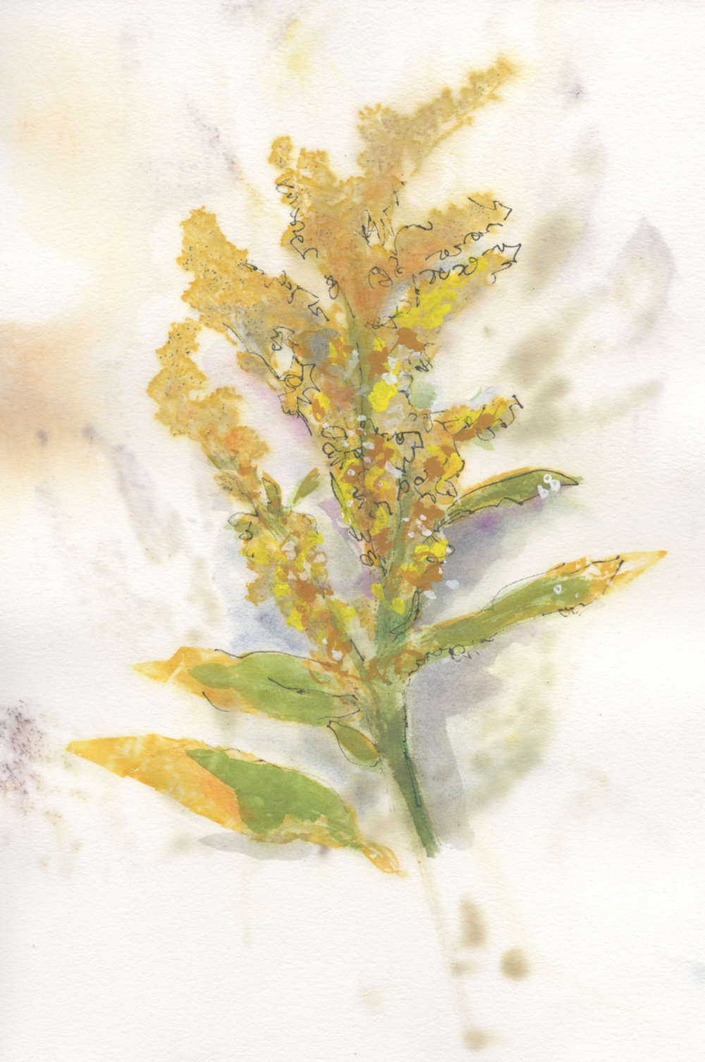 Eco-printed paper using broom flower enhanced with watercolor and ink.