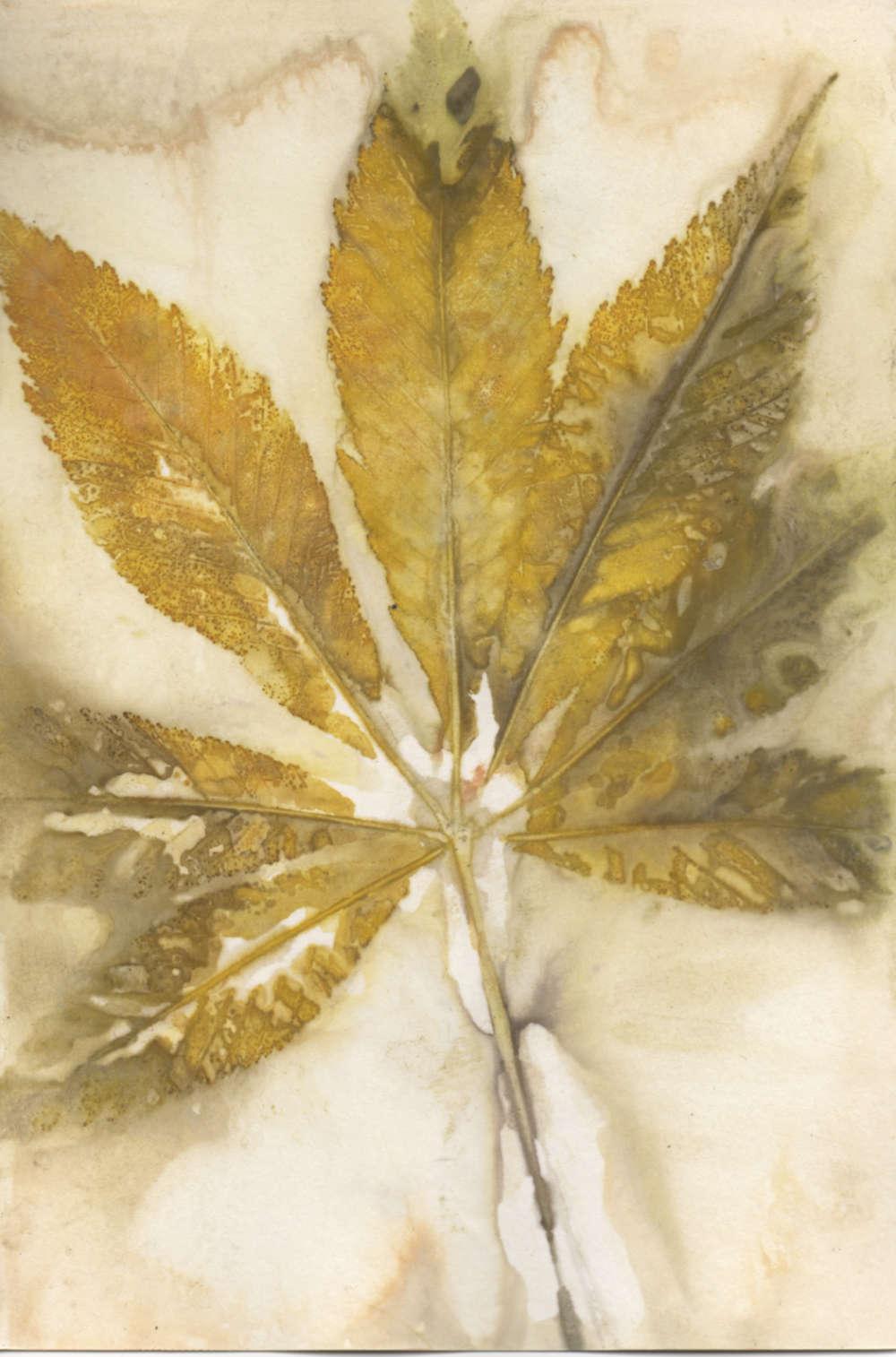 Eco-printed paper using buckeye leaf. No enhancements.