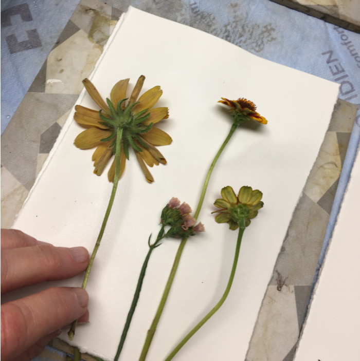 Each flower is carefully laid out on the paper
