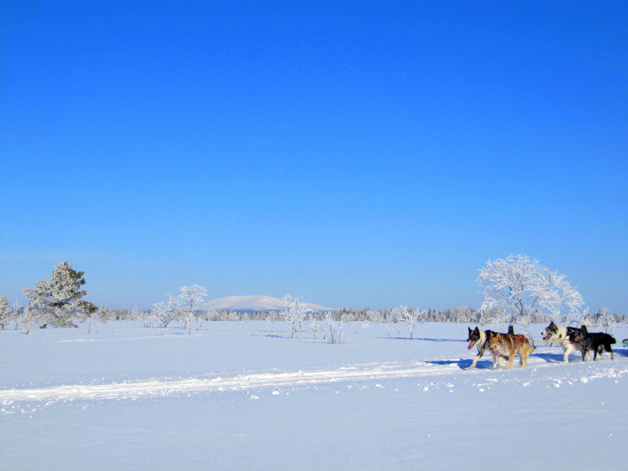 Dogsledding in Ylläs, Lapland.JPG