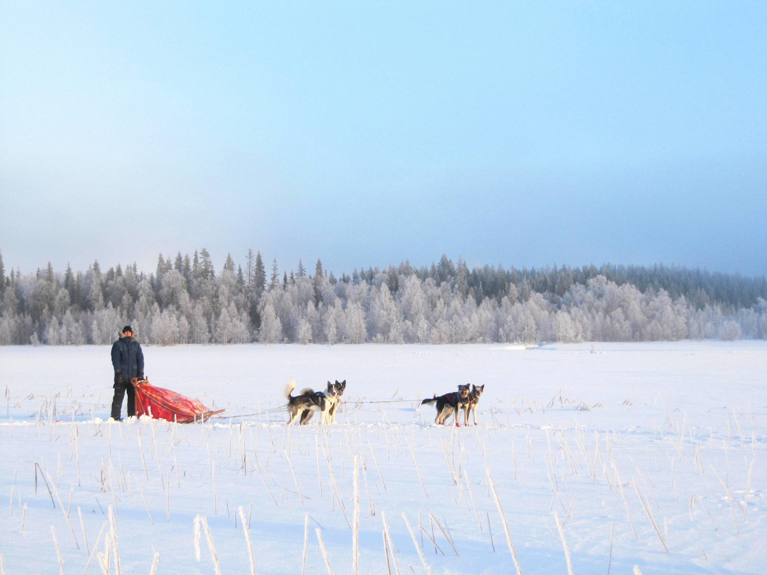 Overnight husky safari in Lapland.JPG