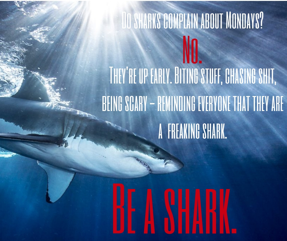 Do sharks complain about Monday_ No. They're up early. Biting stuff, chasing prey, being scary and reminding everyone that they are a shark..jpg
