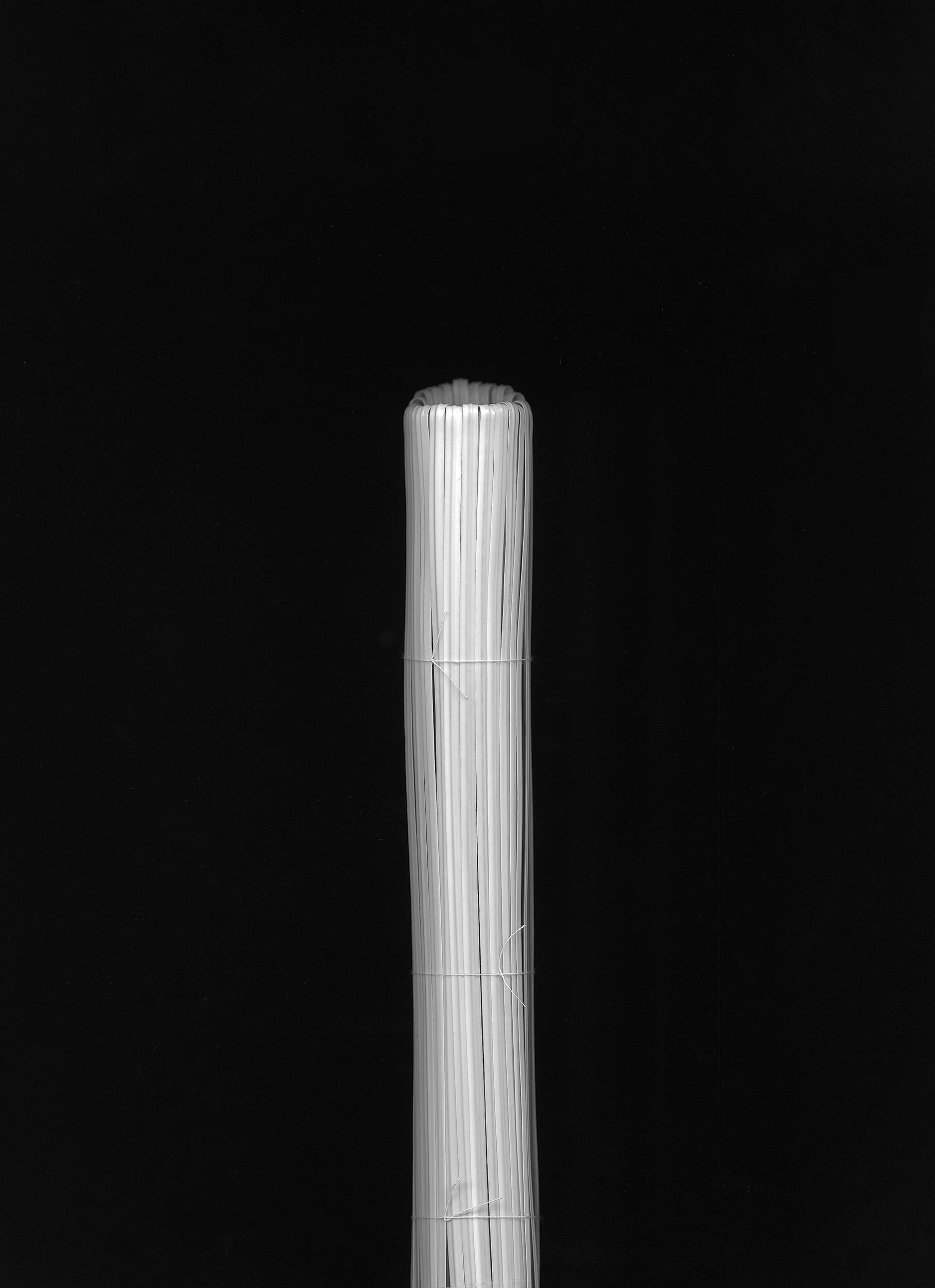 Horsetail (2016)