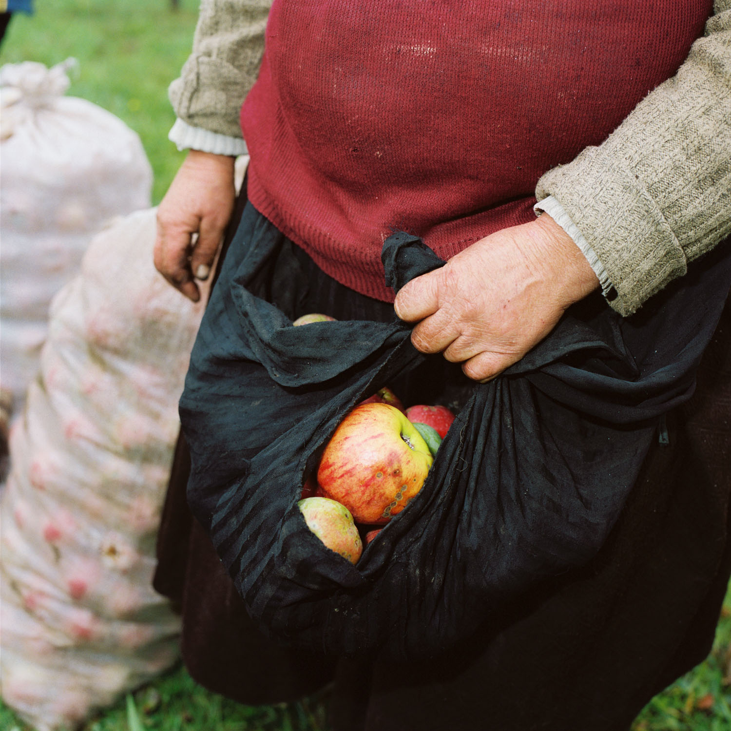 Collecting Apples (2005)