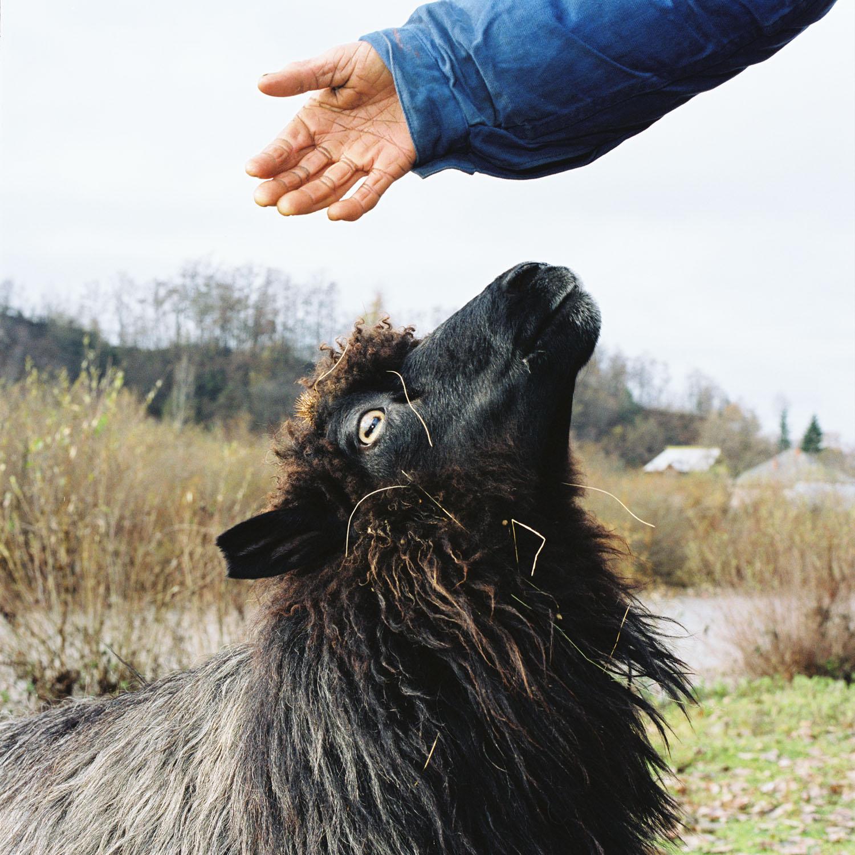 Livestock Market (2003)