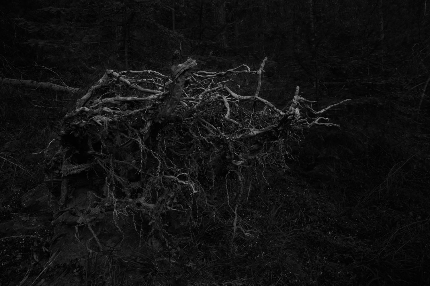 Rooted (2013)