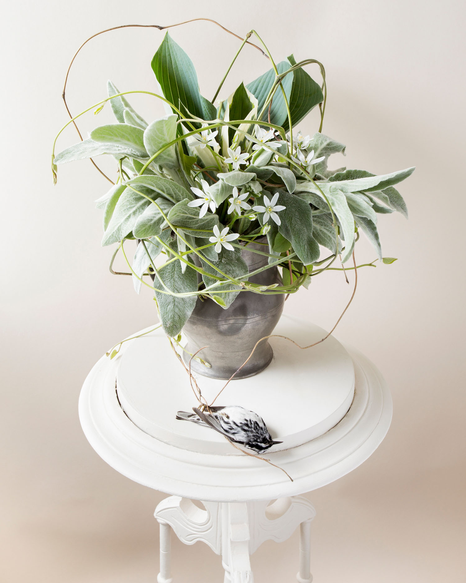 A still life photograph by Kimberly Witham.