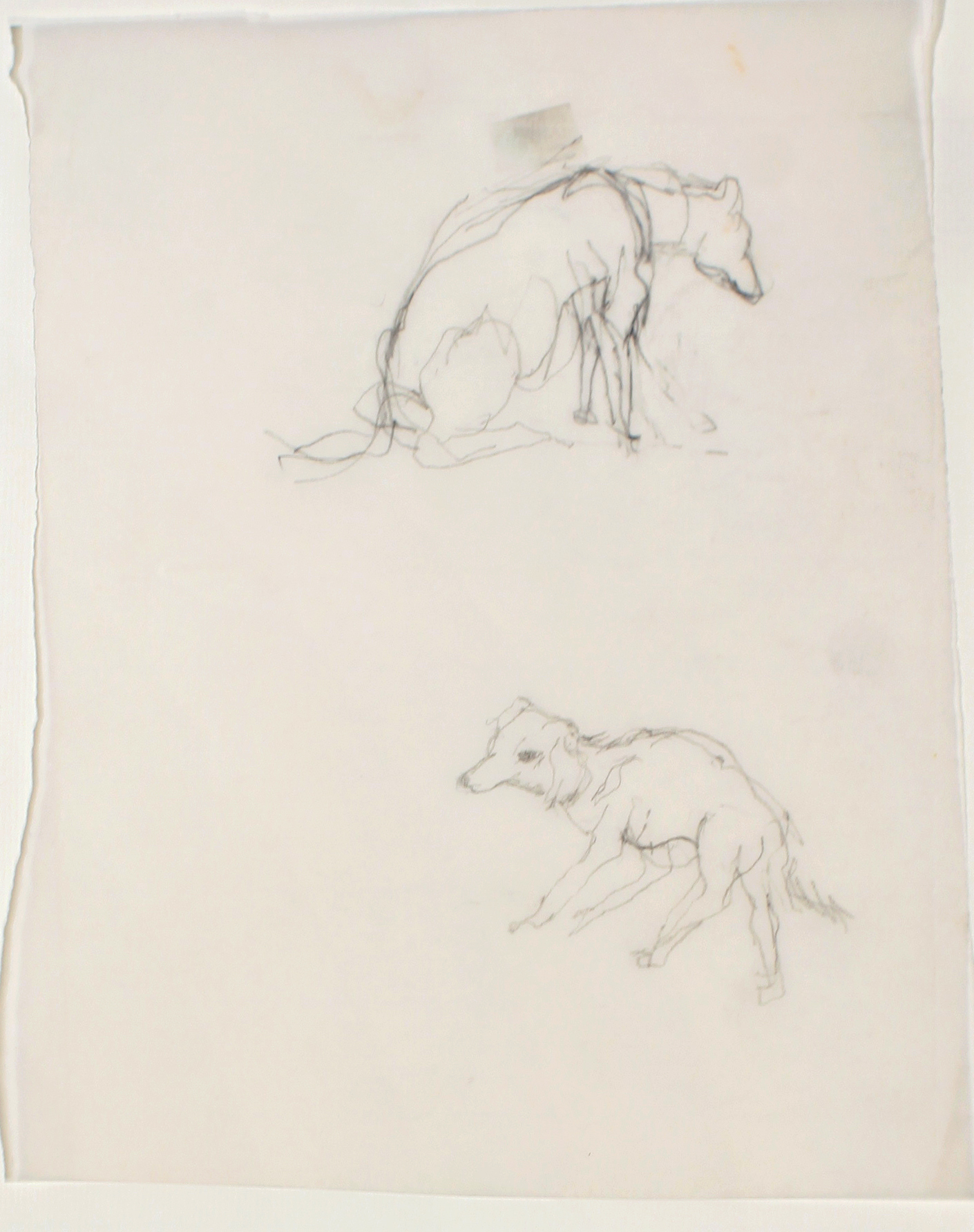 1980s_Two_Dogs_pencil_on_paper_10x8in_WPF594.jpg