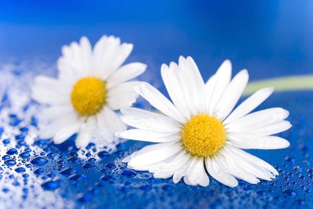 flower-1473704_640.jpg