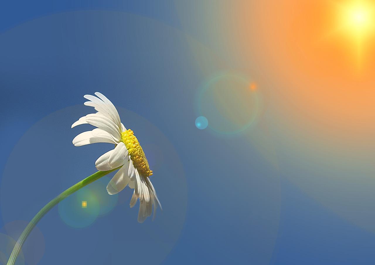 flowerspring.jpg