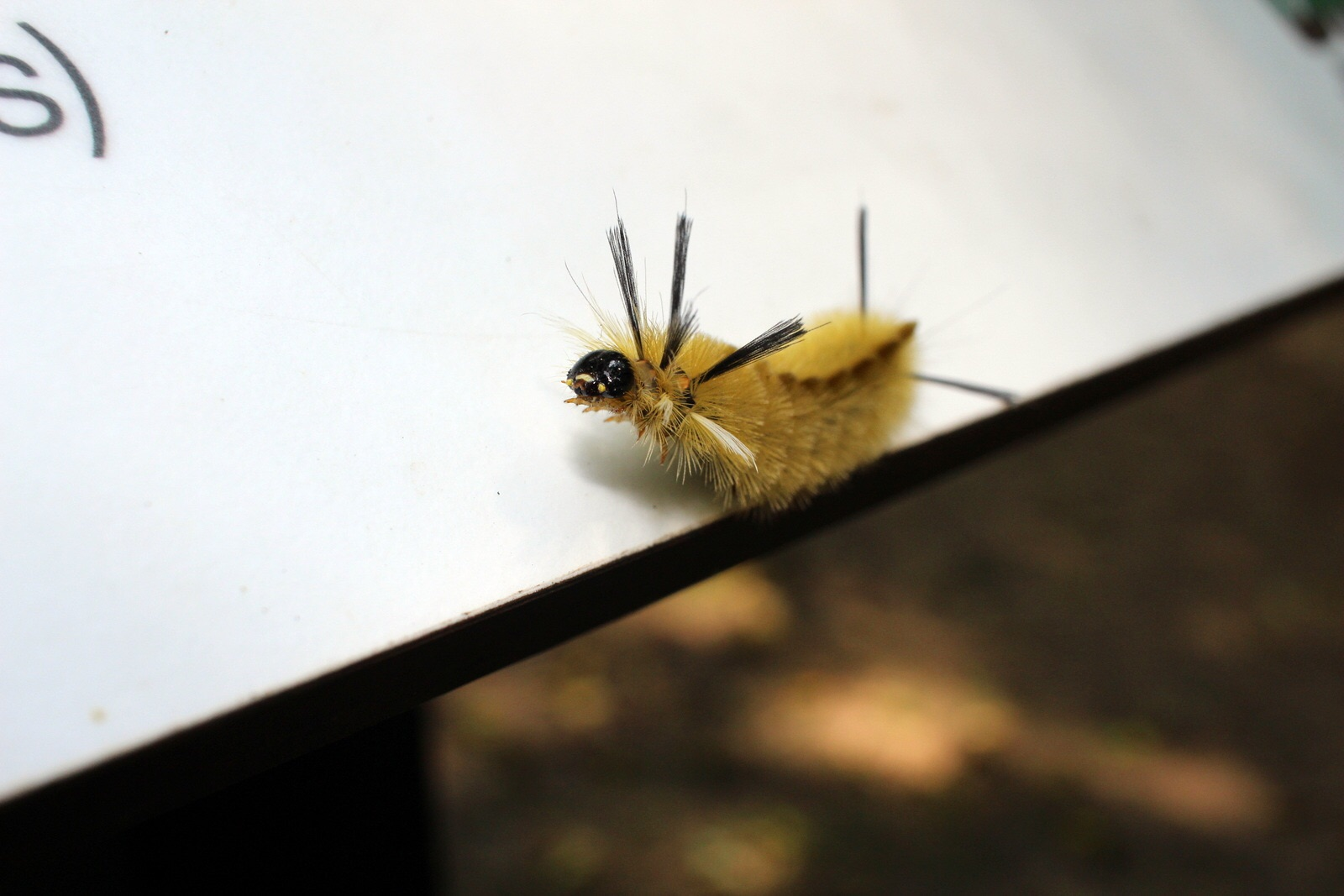 A caterpillar greeted me at the visitor center.
