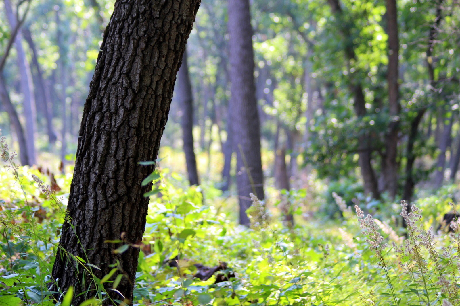 The deep oak savanna.