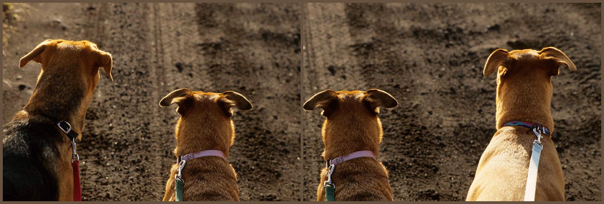 Dog Walk Pair