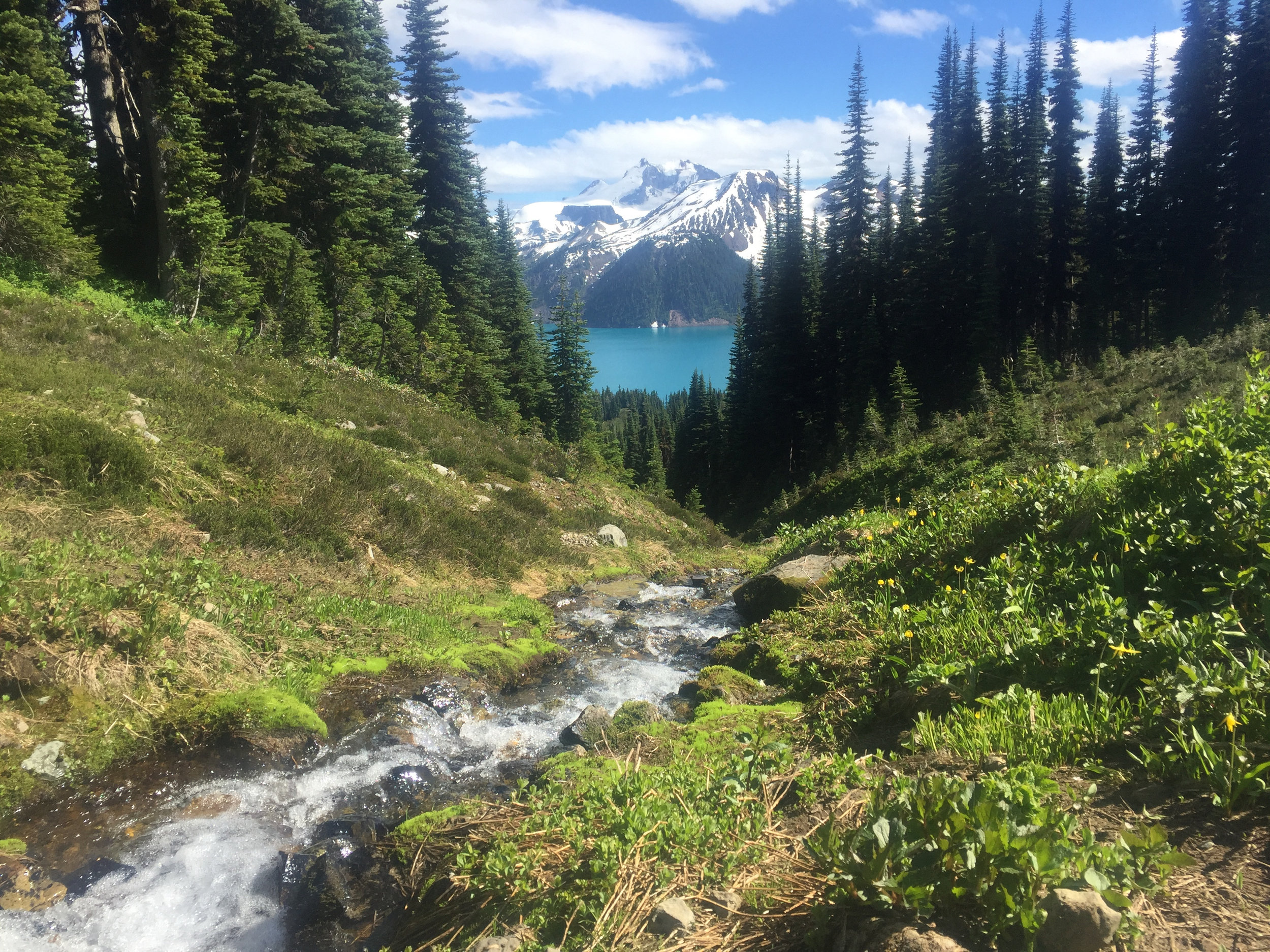 We drank fresh, cold water from the stream. At 11.5km into the hike on a hot day, it was very welcome. That's Garibaldi Lake in the background.