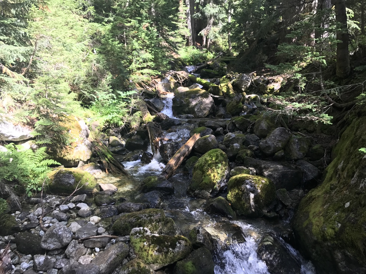 The first part of the hike is pretty standard BC trail, with a few interesting features like this mountain stream.