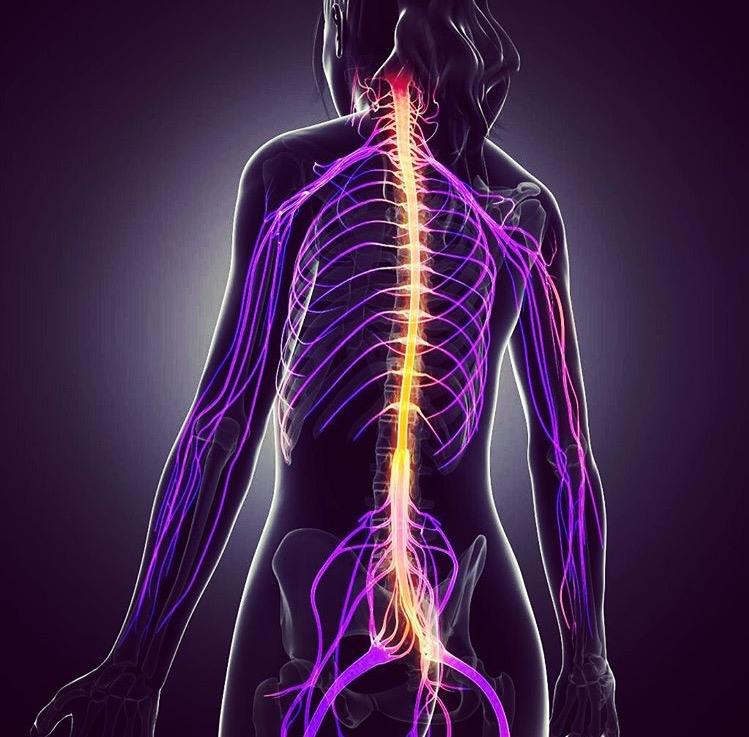Santa Clara Chiropractor Nervous System